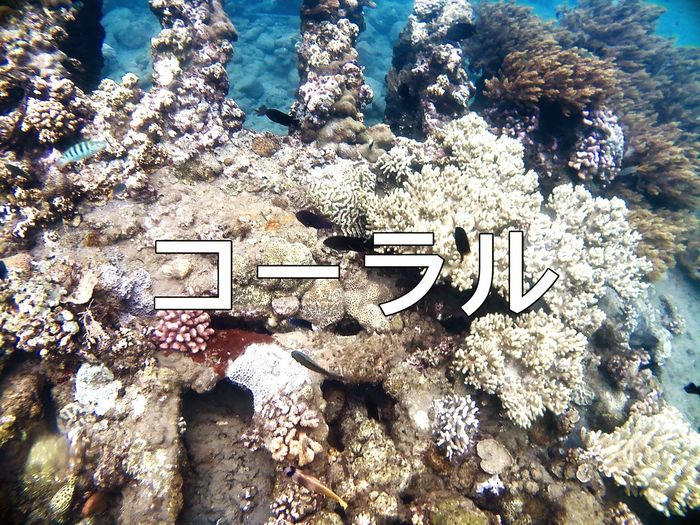 The Coral Life Damn Coral Peace Blue Japan Japanese  Bpro5alpha Blue Nature High Angle View Sunlight Day No People Land Beach Outdoors Water Sea Sand Beauty In Nature Plant Holiday