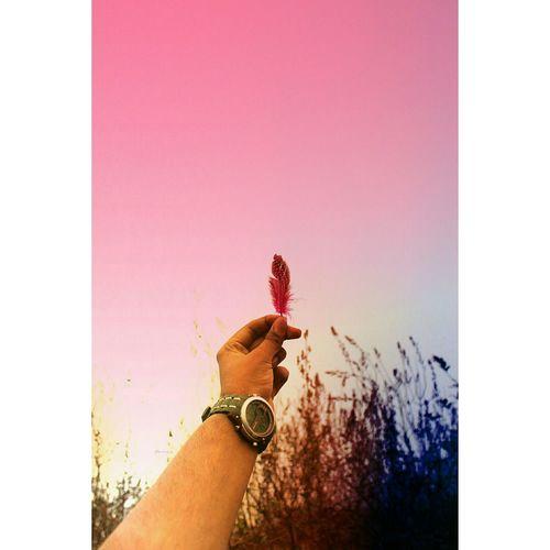 Human Hand One Person Holding Lifestyles Pink Color EyeEmBestPics EyeEm Best Edits EyeEmNewHere EyeEm Selects EyeEm Masterclass Travel Destinations Indianphotographer EyeEm Best Shots Indianphotography EyeEm Best Shots - Nature TravePhotography Beauty In Nature Nature Freshness Wanderersoul