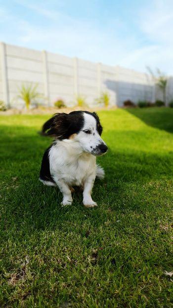 My Best Photo 2014 Jodyvford Cape_town Dog
