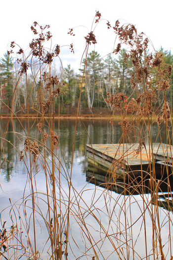 Autumn foliage surrounding dock on pond in North Woods of Hayward, WI. Autumn Hayward, WI North Woods  Northwoods Pier Pond Reflection Rural Wisconsin Beauty In Nature Day Dock Foliage Grass Growth Lake Landscape Nature No People Non-urban Scene Outdoors Plant Reflection Scenics - Nature Sky Tranquil Scene Tranquility Tree Water