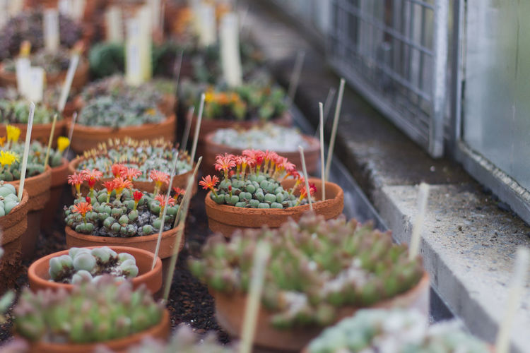 High angle view of potted cactus in th botanical garden