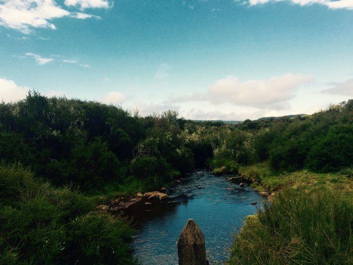 Aberdares National Park, Kenya Kenya Nature Nationalpark Peace Beautiful Nature Canon CanonEOS600D Water Still Life Landscape