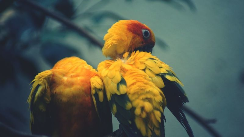 Parrots Pair I've Got You