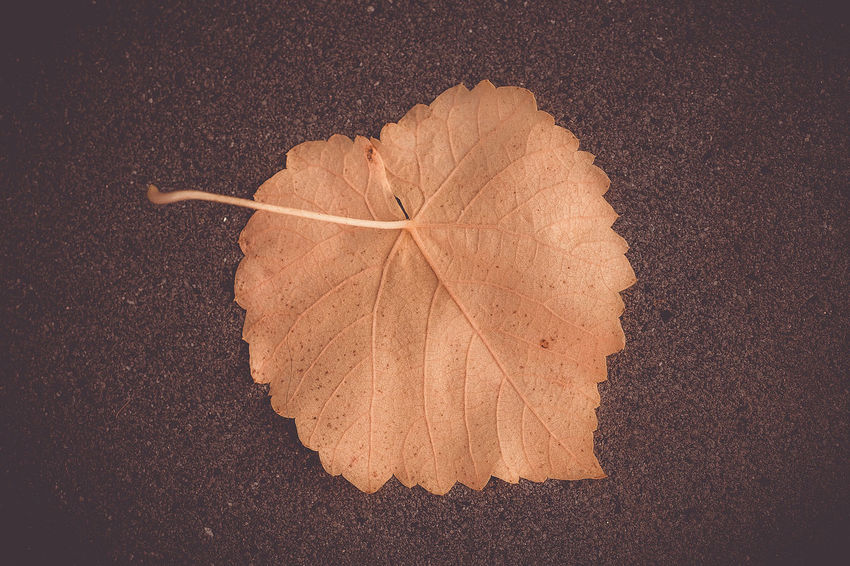 autumn Leaf Plant Part Change Autumn Close-up Dry Nature No People Leaf Vein Directly Above Day Vulnerability  High Angle View Fragility Brown Natural Pattern Plant Outdoors Leaves Maple Leaf Natural Condition Fall