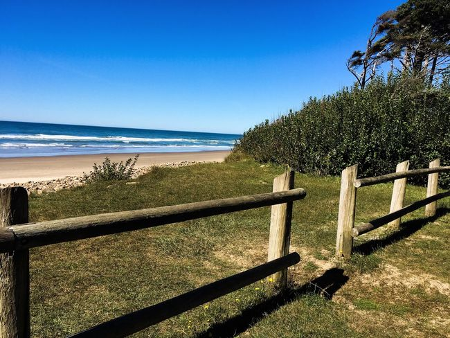 Sea Beach Tree Fence Blue Clear Sky Water Grass Nature Shore Editedbyme Wave Outdoors Walking Around Taking Pictures Taking Photos Seascape Enjoying Life Calm Clear Sky Sky Relaxing