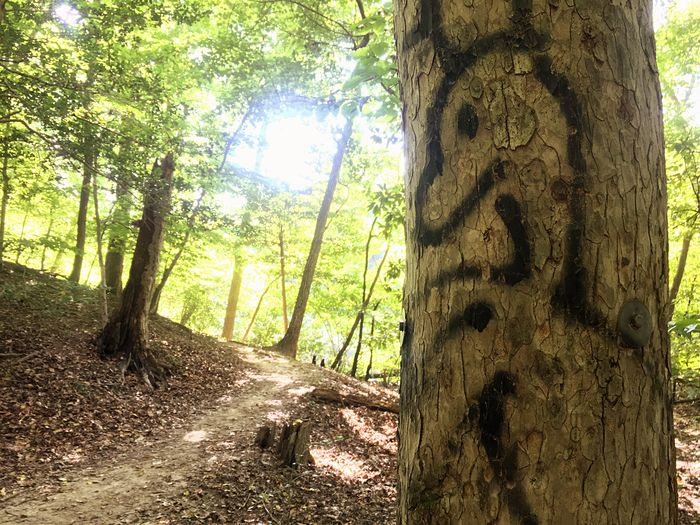 Tree Trunk Forest Nature Day Outdoors Sunlight Scenics Branch Trail Graffiti