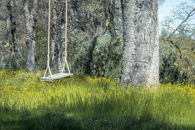 Hanging Swing &