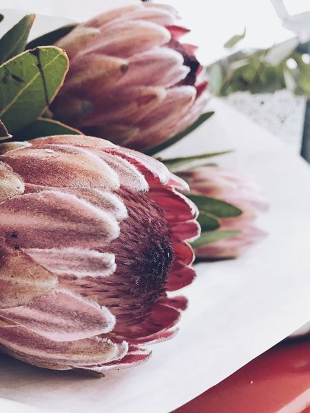 Freshness No People Indoors  Close-up Table Flower Collection Proteas Protea Bouquet Of Flowers Protea Flower Bouqet Of Flowers Petal Botanical Pink Color Plant Growth Closeup Botanic Flower Protea Blossom Romantic Flowers Freshness Still Life Close Up Flora