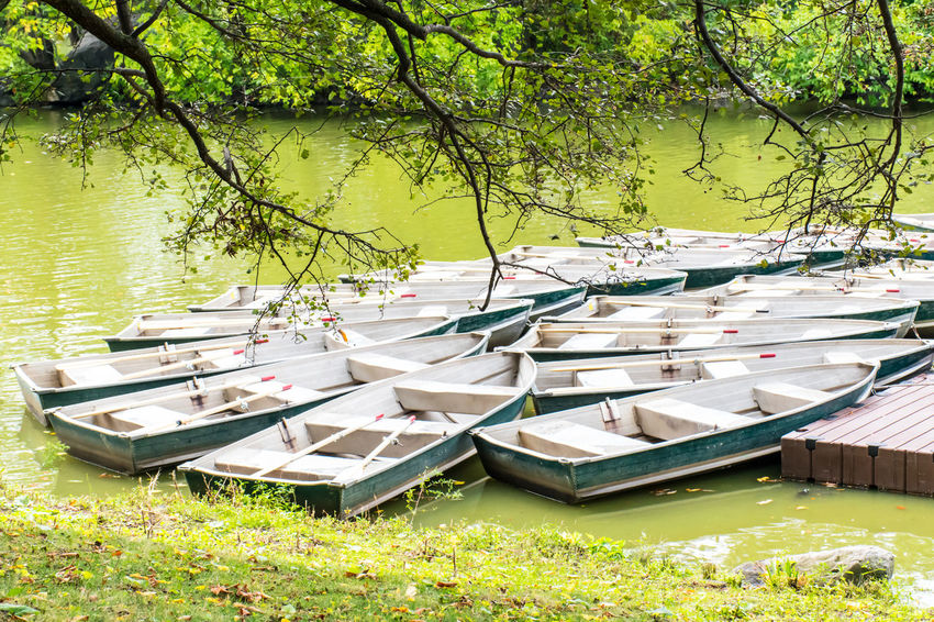 Beauty In Nature Branch Day Grass Green Color Growth Lake Large Group Of Objects Moored Nature Nautical Vessel No People Outdoors Scenics Tree Water