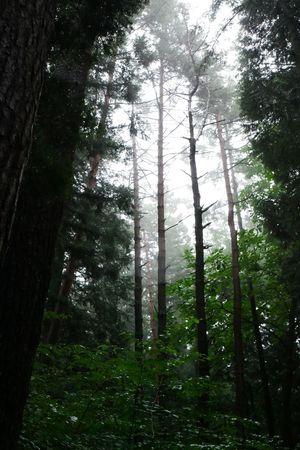 After The Rain Rain Season  Mist Forest Woods Nature Nature Photography Naturelovers Deepbreath Lumix