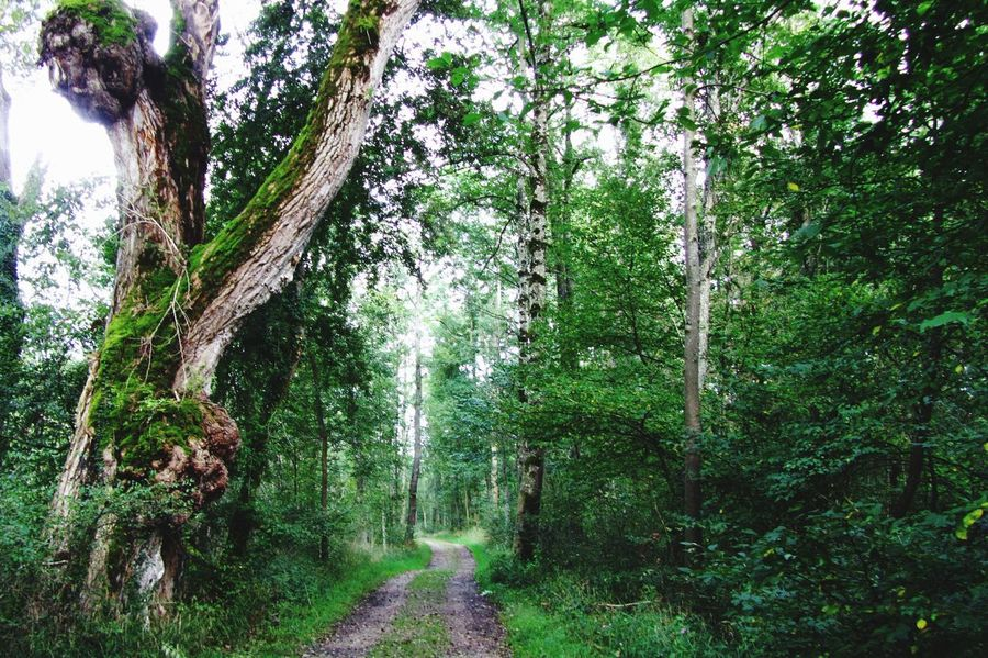 Waldweg auf Herrenchiemsee Bayern Germany Chiemsee Herreninsel Waldweg Waldspaziergang Forest Forest Photography Forest Floor Forest Trees Hanging Out Taking Photos Hello World EyeEm Gallery Outdoor Photography Landscape_Collection Forest Collection EyeEm Nature Lover Eyem Nature Lovers
