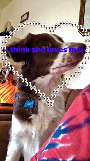 Puppy 🐶 love