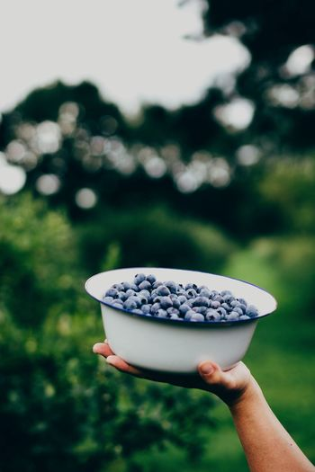 Cropped image of woman holding blueberries at yard