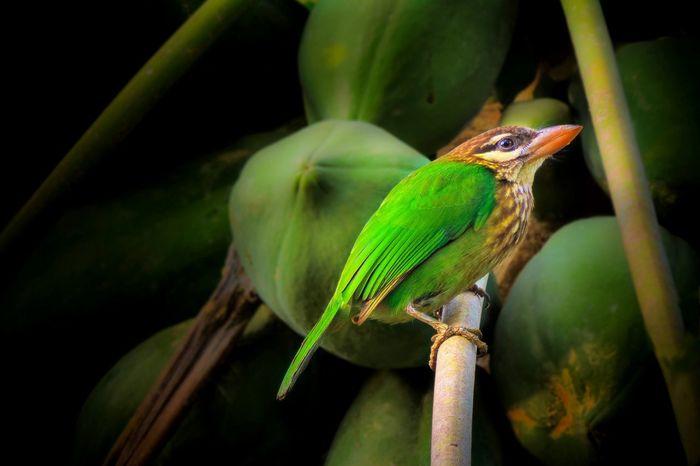Birds Green Alone Indian Kerala Nikon Bird Photography BirdLovers Birdwatching Baby Birds