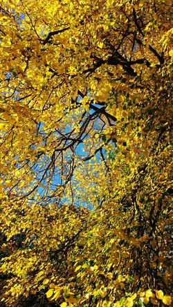 Trees Nature Autumn