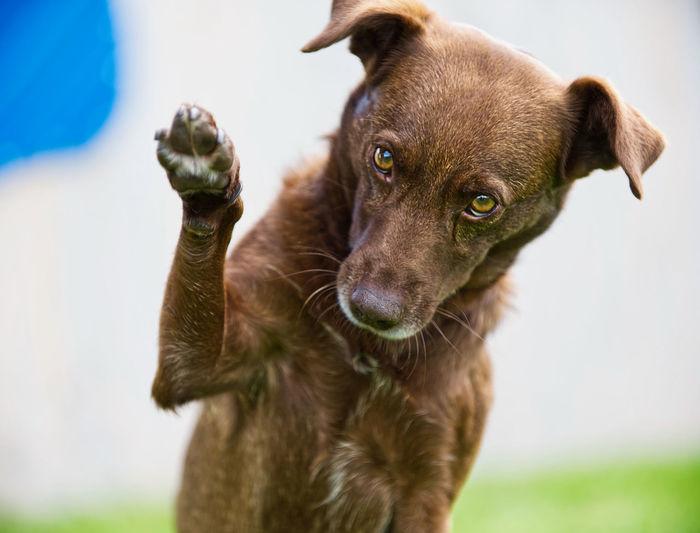 Dog with waving paw