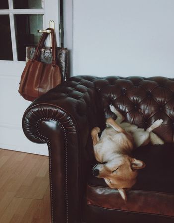 Shiba Inu LOVE Shiba Inu Shiba Sleeping Dog Leather Bag Chesterfield
