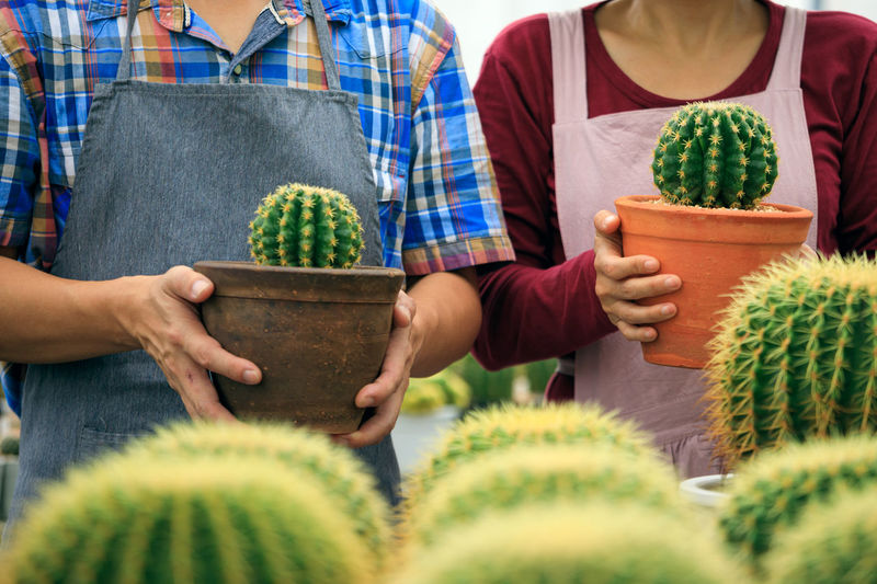 Two gardeners man and woman holding cactus pot together in greenhouse farm