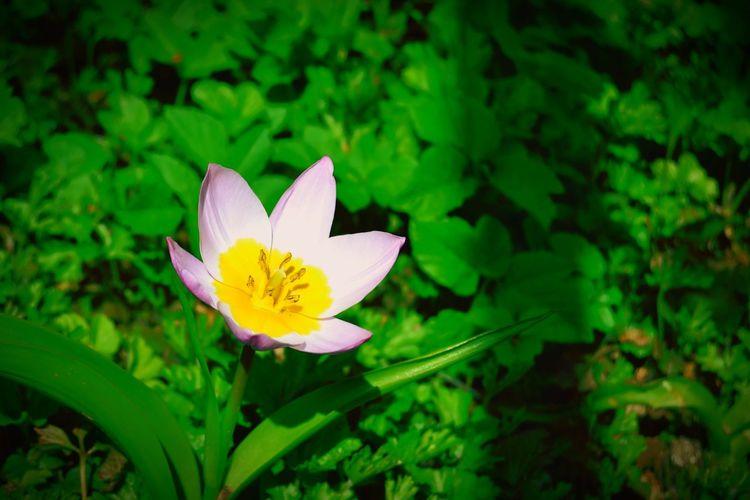 Neerpelt Flower