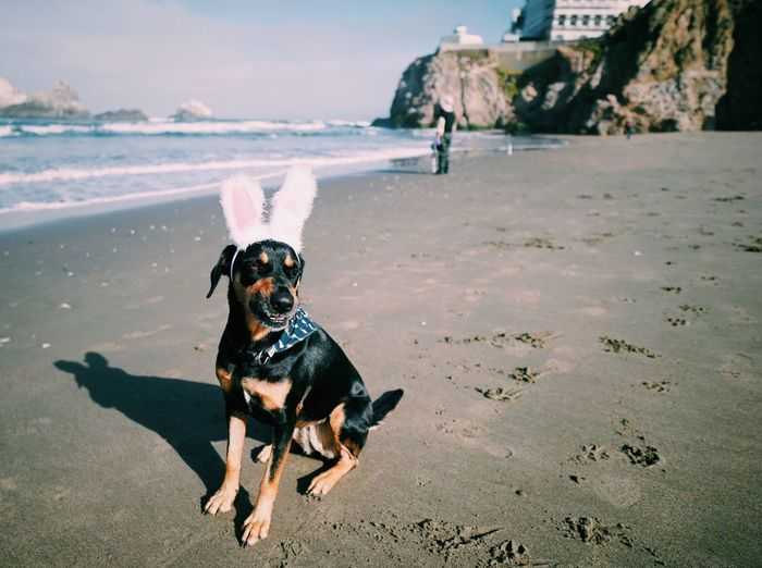 Easter bunny! Dog Canine Pets Domestic One Animal Domestic Animals Mammal