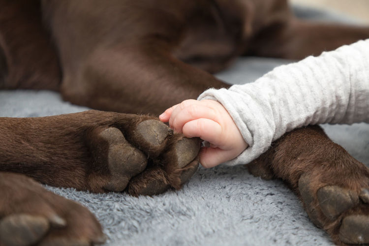 Cropped Hand Of Baby Touching Dog Leg