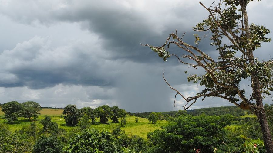 Tree Rural Scene Storm Cloud Branch Sky Landscape Cloud - Sky