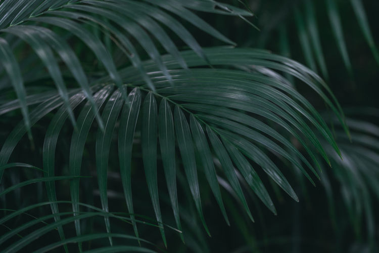 Beauty In Nature Close-up Day Fern Focus On Foreground Fragility Freshness Frond Green Color Growth Leaf Nature No People Outdoors Palm Leaf Palm Tree