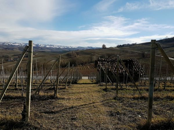 Outdoors Day Cloud - Sky No People Tree Nature Clear Sky Countryside Vineyards In Winter Italian Vineyards Peaceful View Calming Views In The Nature In The Vineyard Langhe Piedmont Italy Growth Blue Tranquility Peaceful Place On The Hill Landscape Rural Scene Agriculture Scenics
