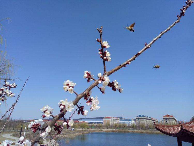 Tree Flower Branch Clear Sky Blue Water Springtime Blossom Sky