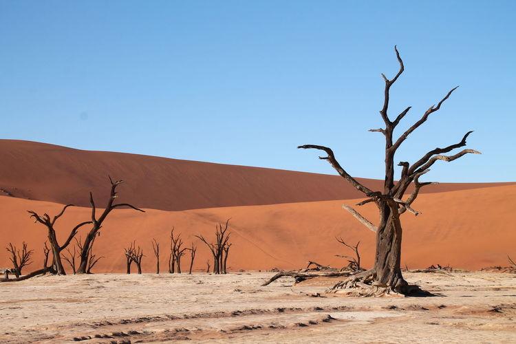 Bare tree on desert against clear sky