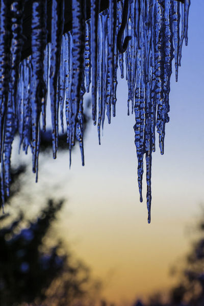 Icicles hang from our roof with a glorious backdrop of orang and blue--a winter sunset. Icicles January Orange Sky Winter Beauty In Nature Blue Sky Close-up Cold Temperature Frigid Frozen Hanging Ice No People Outdoors Purple Sun Sunset