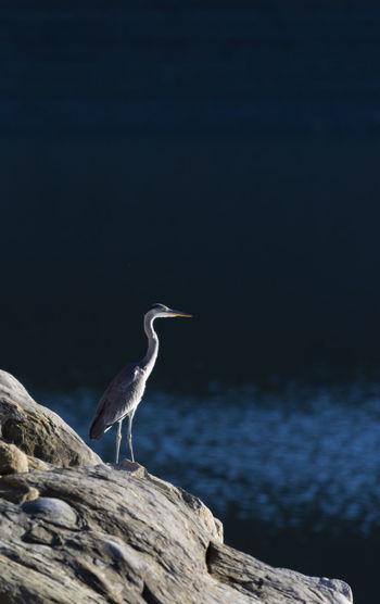 Lago Del Salto Natura Animali
