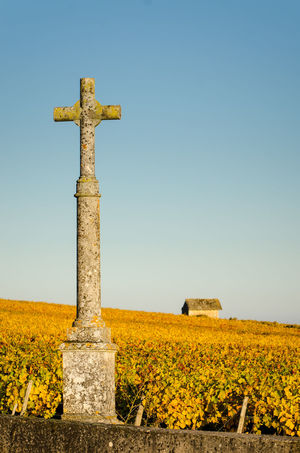 EyeEm Selects Agriculture Cross Sky Blue Clear Sky Day Outdoors No People Calvary Vines Burgundy Bourgogne Leaves Leaf Autumn Yellow Christianity Religion Traditional Wine Stone Material Paint The Town Yellow