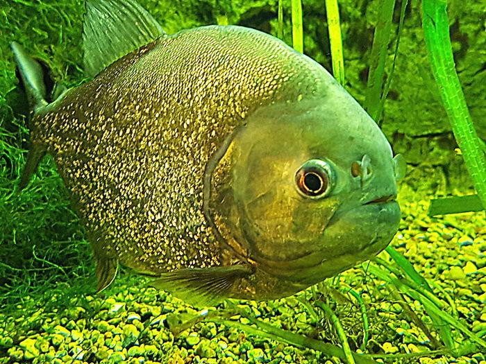 2017 Close-up Green Color Grüne Farben Unter Wasser Underwater