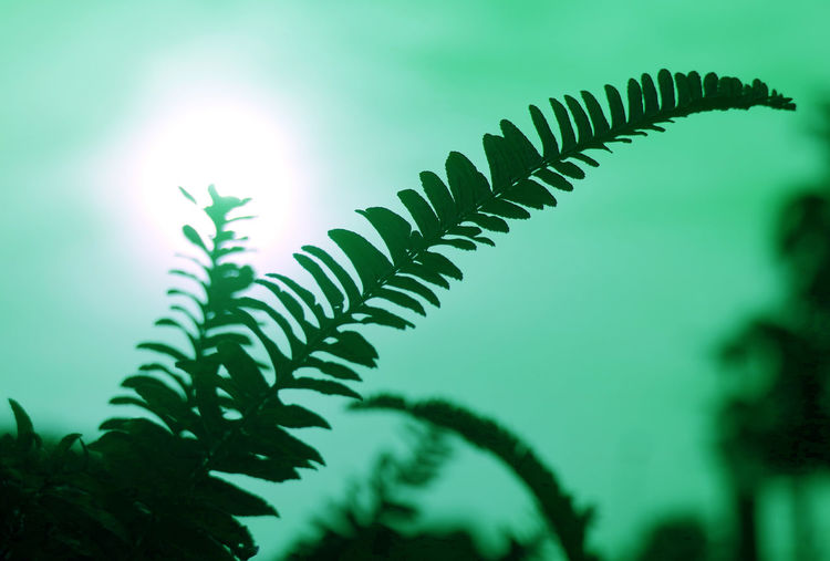 Low angle view of fern leaves against sky