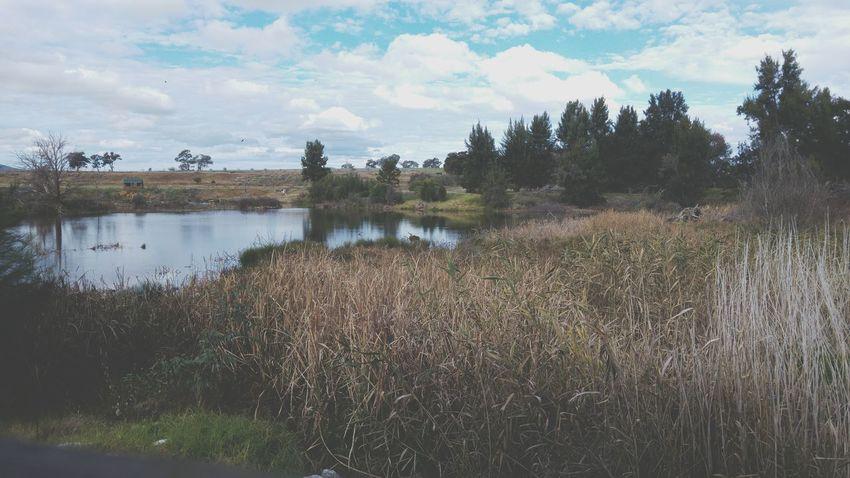 Mudgee Putta Bucca Wetlands Scenary Birds Water Dry Reeds Blue Skies