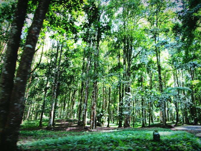 Nice forest environment Trees And Nature Treescape Trees Collection Trees And Leaves Trees Of Eyeem Creation CreationOfGod Nice Environment Tree Nature Green Color Growth Beauty In Nature Forest Day Outdoors Tranquility No People Tree Trunk Low Angle View Grass
