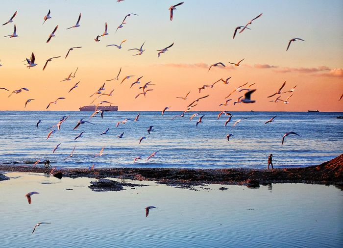 Seagull Bird Animal Animal Themes Animal Wildlife Vertebrate Group Of Animals Large Group Of Animals Animals In The Wild Flying Flock Of Birds Sky Water Nature Beauty In Nature No People Scenics - Nature Sea Sunset Mid-air Seagull