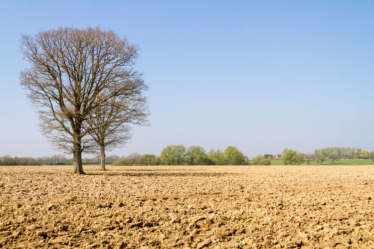 View of agricultural field against clear sky