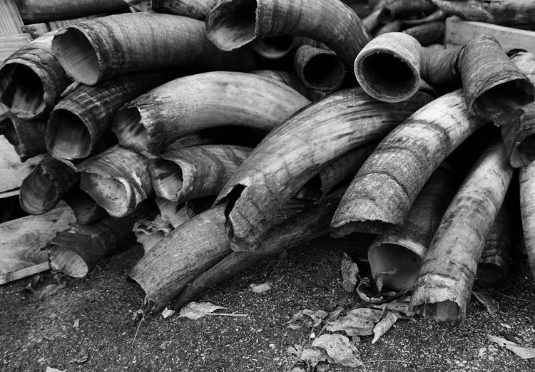 Taken at a shop in Fort Worth, Texas. Fortworth Texas Horns Atwork Craftsman Grey Blackandwhite Photography Commercialphotography Sony A6000 Sonyimages