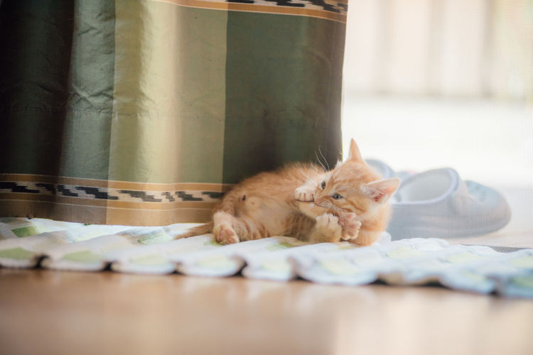 Kitten Sitting On Rug At Home