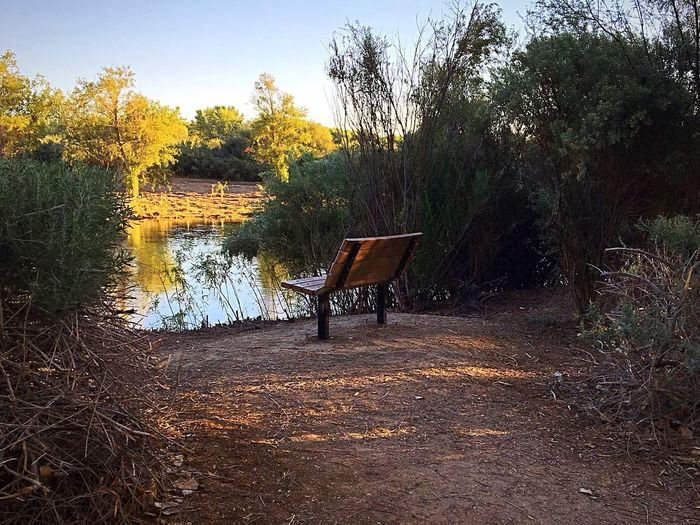 A Lonely Bench Waiting For Someone To Sit On It And Admire The Peaceful Colorado River Flowing By It. ME ALONE ADVENTUROUS MOOD Peaceful Moment Morning Walk Tree Plant Nature No People Growth Absence Empty Outdoors Tranquility Bench Water Beauty In Nature Park