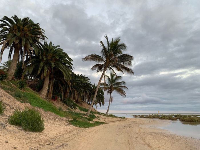 Tree Sky Plant Cloud - Sky Beauty In Nature Palm Tree Land Scenics - Nature Tranquility Sea No People Growth Tranquil Scene Nature Beach Water Horizon Over Water Tropical Climate Day Sand