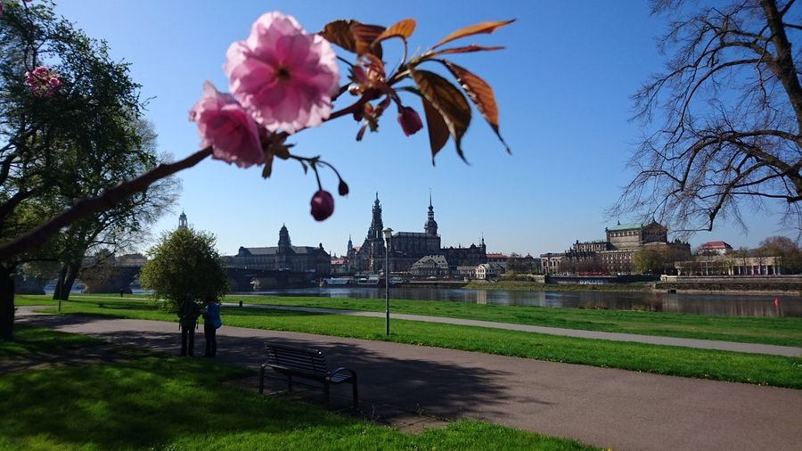 Architecture Flower Tree Spring Dresden Canalletoblick XperiaZ5