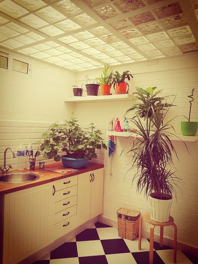 Potted plants hanging from ceiling