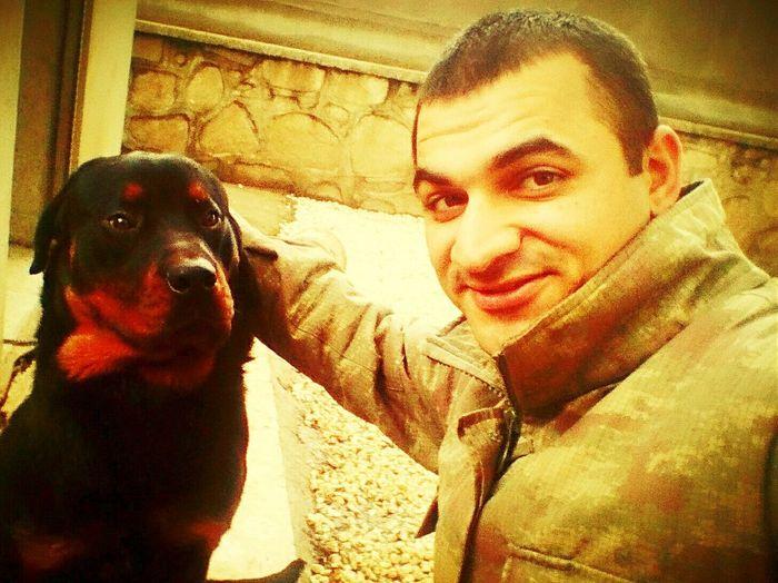 Rottweiler Rottweilerlove Dog ,Rottweiler Dog Dog Love Hatay