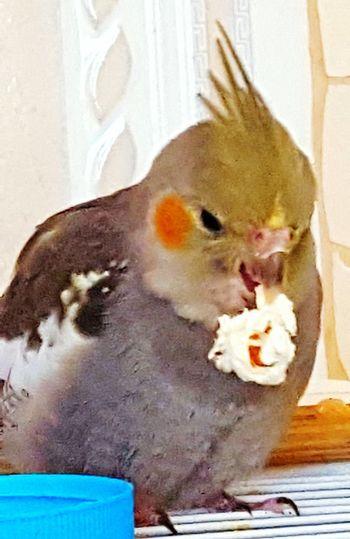 My Cocktail Loves Popcorn Popcorns Bird Photography Birds_collection Birds Of EyeEm  Bird And Popcorn No People Domestic Animals Animal Themes Food New Talents On EyeEm HelloEyeEm EyeEm Diversity EyeEmNewHere