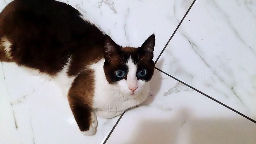 My Cat! Cute Pets