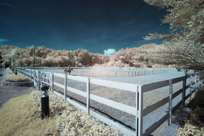 An infrared view of horse stable. Infrared Perspective Animal Themes Beauty In Nature Blue Sky Color Infrared Colorful Foliage Day Horse Hot Temperatures Infrared Photography Landscape Leisure Ride Mammal Nature Outdoors Railing Riding Scenics Sky Sunlight Tranquil Scene Tree Wood Railing Yellow Foliage