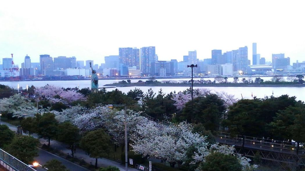 Tree Skyscraper Urban Skyline Cherry BlossomEnjoying The Moment Sunset_collection Springtime City City Cityscape Architecture Outdoors Park - Man Made Space Downtown District Sky Travel Destinations No People Eye4photography  EyeEm Gallery Building Exterior Built Structure Day Modern Nature Politics And Government